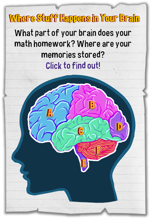 What Part Of The Brain Stores Memory >> Brain, Harrison's Head Issue #1, Finding Stuff Out E-zine